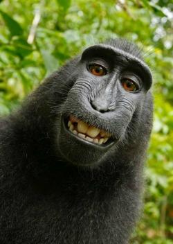 Τίτλοι τέλους στην υπόθεση «Monkey Selfie»