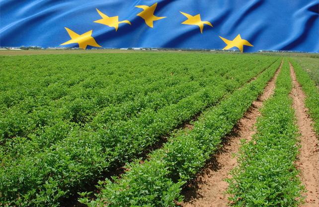 Επιτρέπεται η αποψίλωση περιοχών με φυτά μολυσμένα από Xylella Fastidiosa