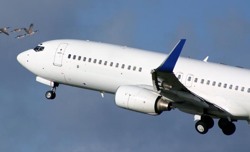 Πρόσκρουση πτηνού σε αεροσκάφος: εύλογα μέτρα προς αποφυγή καθυστερήσεων