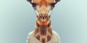 """Επιστημονικό συνέδριο """"Animalia"""" με νομικές εισηγήσεις"""
