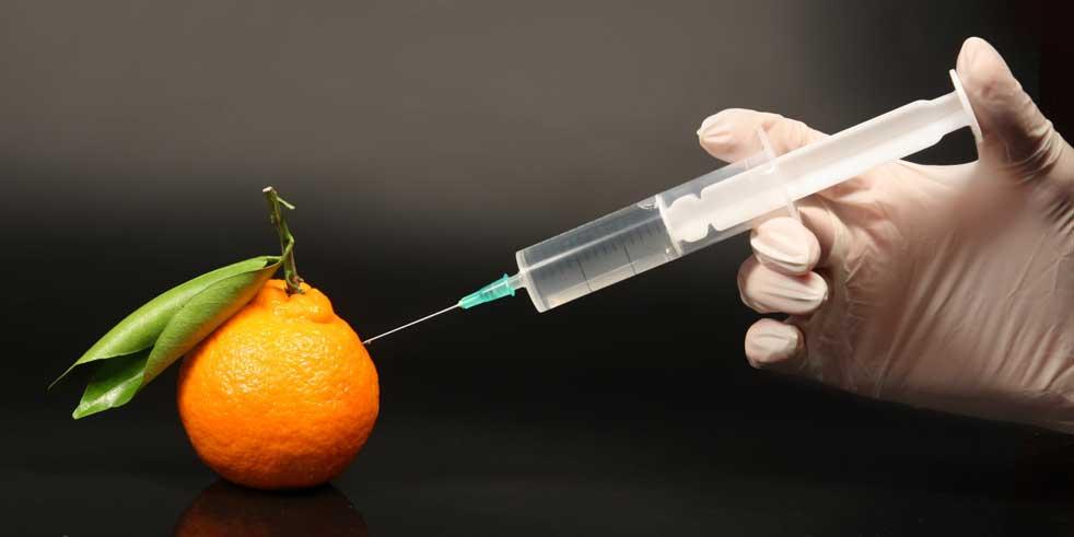 Γενετικά τροποποιημένοι οργανισμοί στην Ε.Ε. – Quo Vadis?