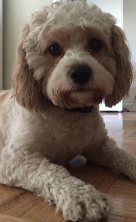 Διετής φυλάκιση δικηγόρου επειδή σκότωσε το σκύλο της συντρόφου του